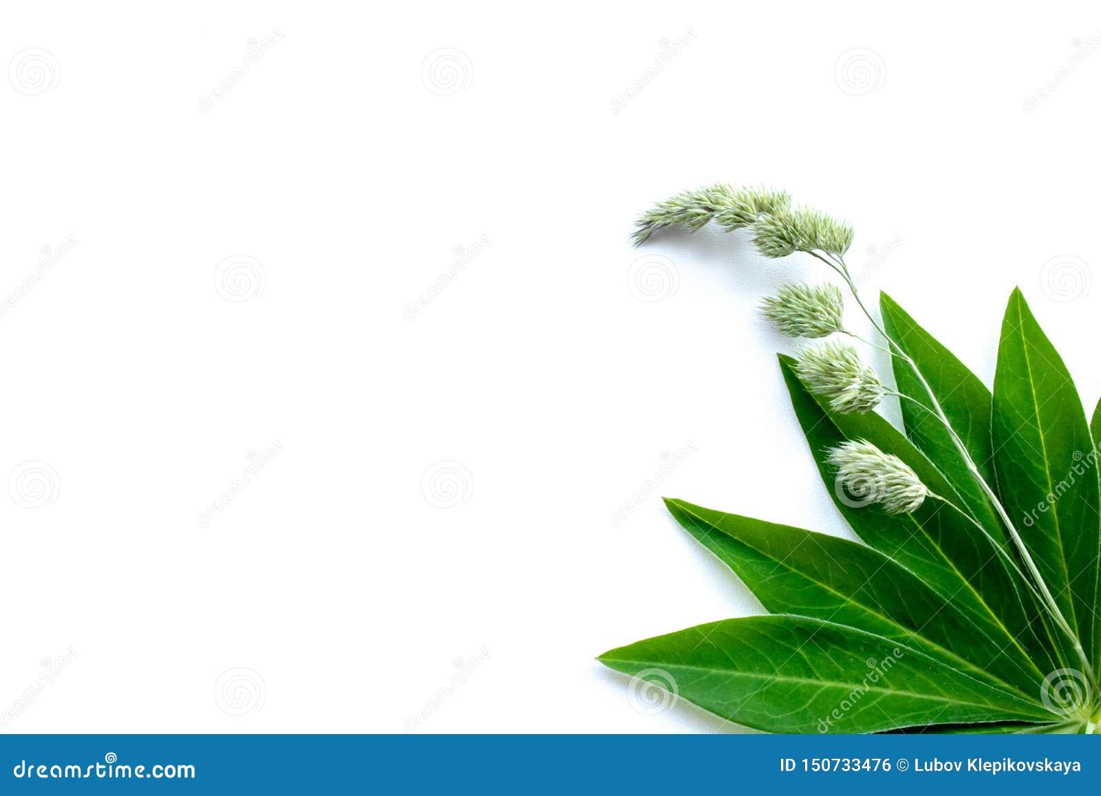 Fondo blanco con las hojas y la cuchilla de la hierba verdes