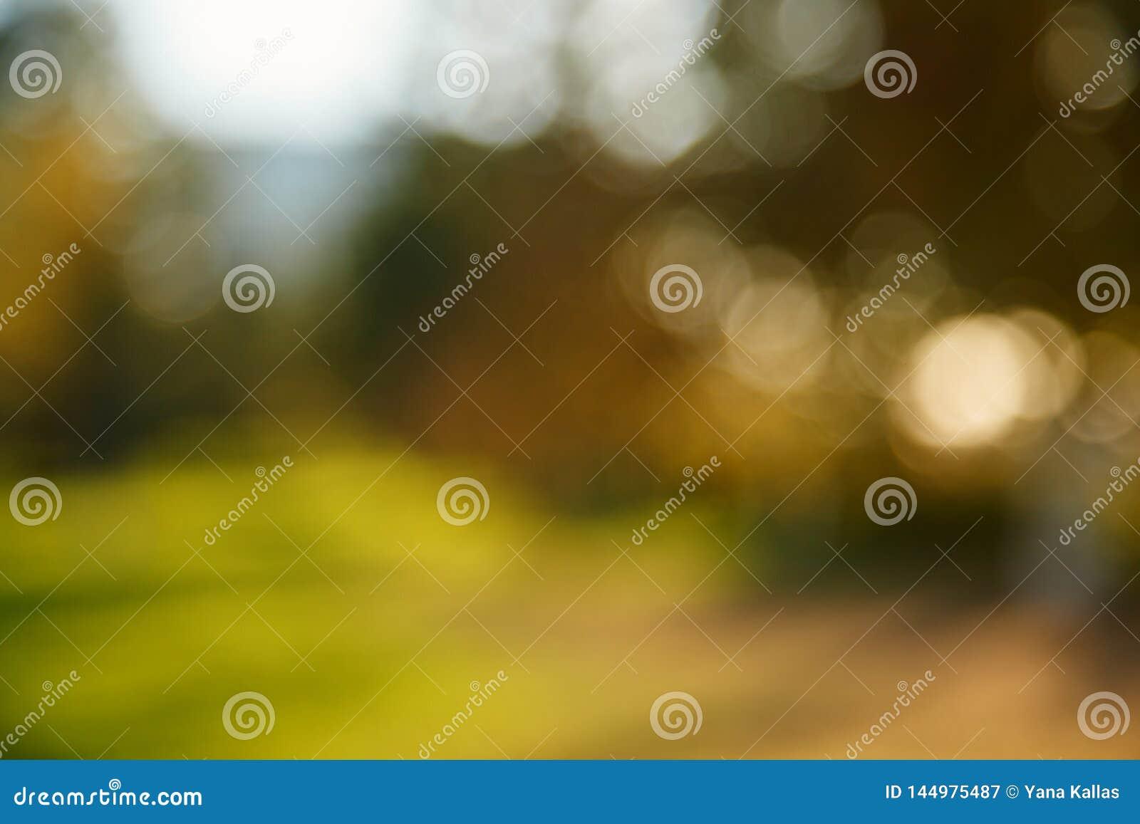 Fondo borroso extracto de la naturaleza ?rboles forestales, d?a soleado, resplandor del sol, bokeh Contexto Defocused para su dis