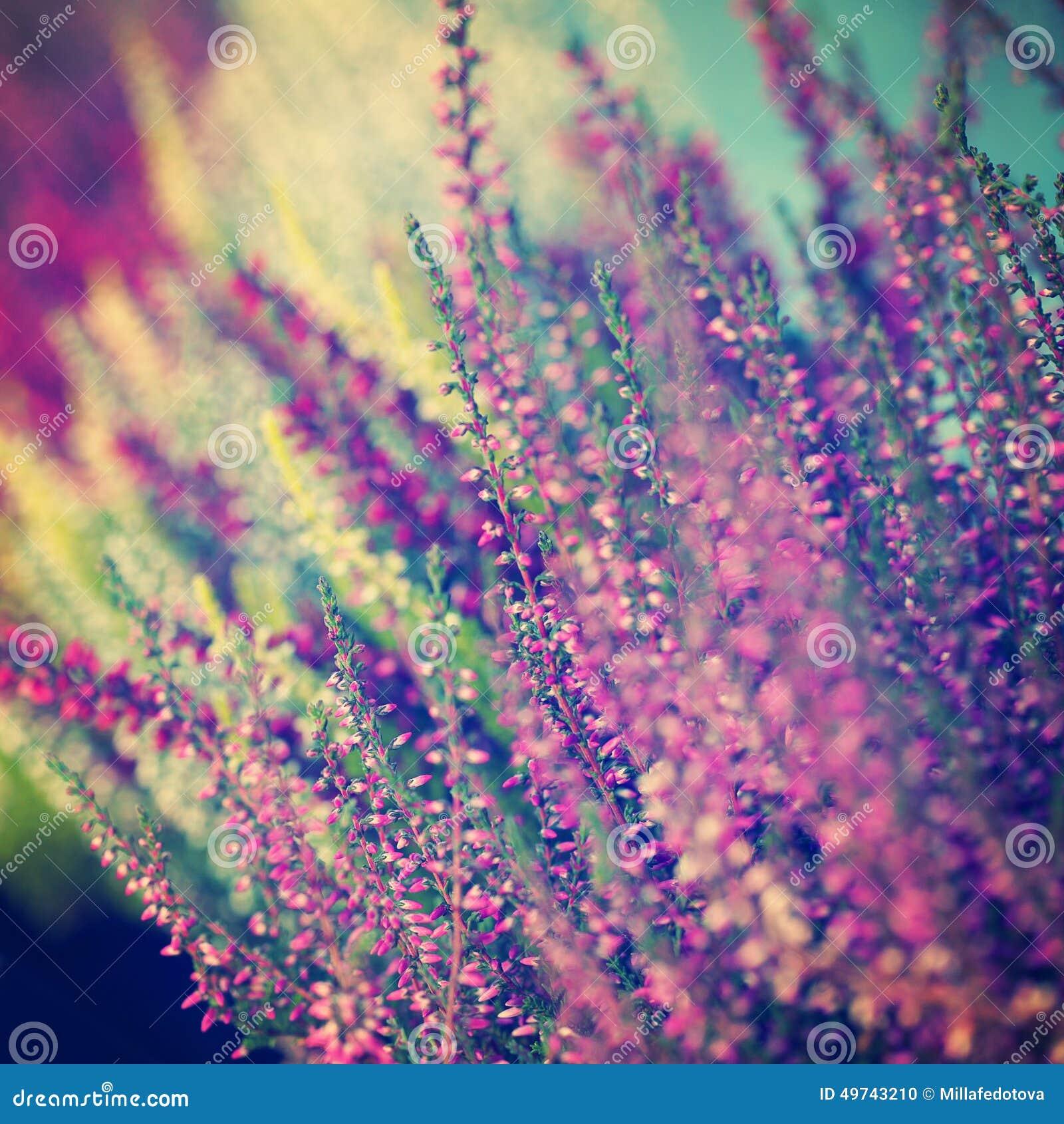 Fondo borroso extracto floral con las flores