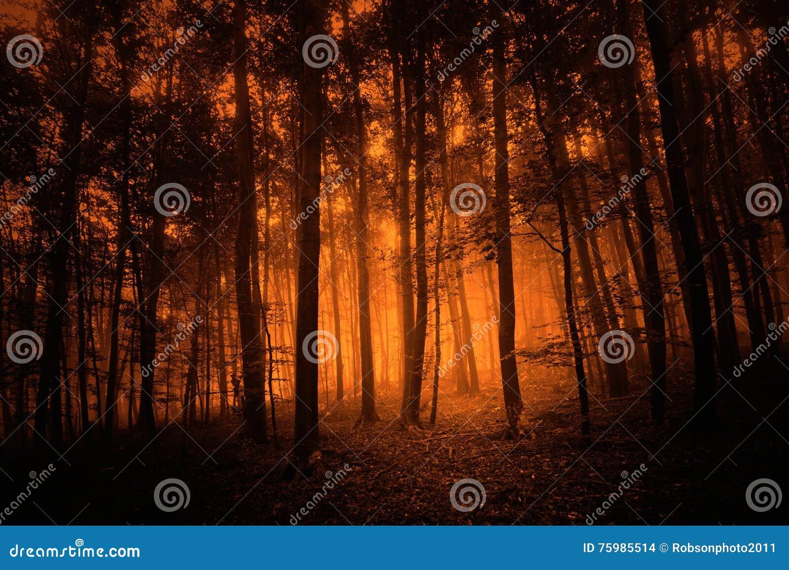 Fondo coloreado rojo oscuro del bosque del misterio