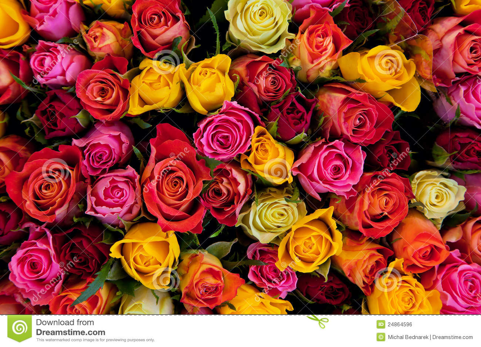 Fondo colorido de las rosas