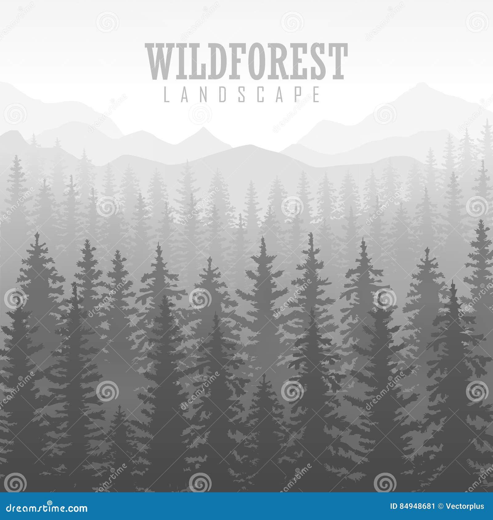 Fondo Conífero Salvaje Del Bosque Árbol De Pino, Naturaleza Del ...