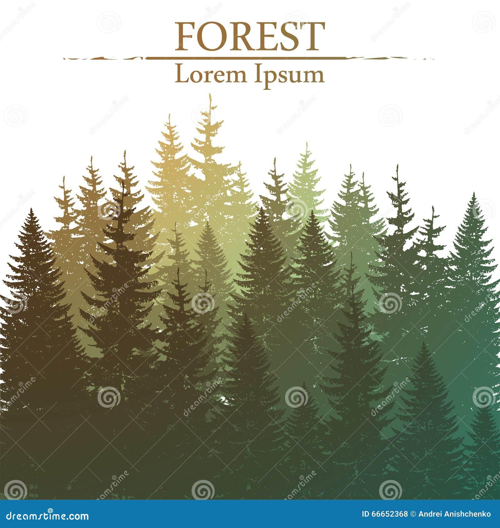 Fondo conífero salvaje del bosque