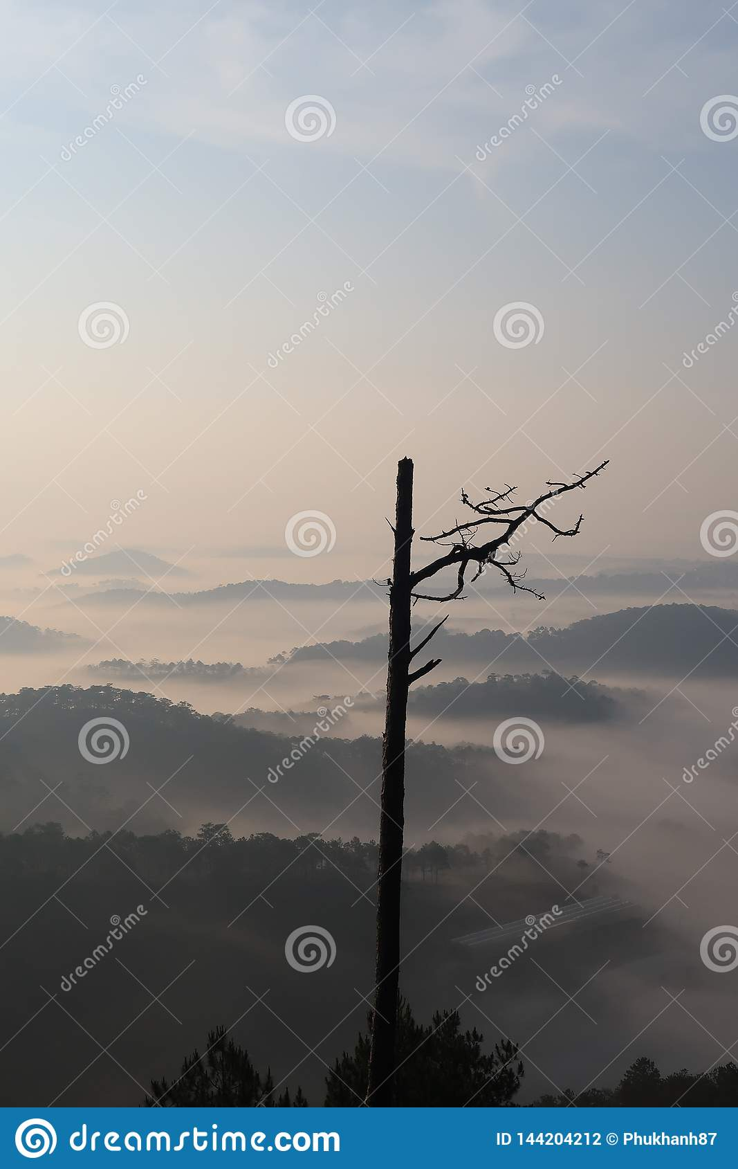 Fondo con aria fresca, luce magica e la foresta della copertura della nebbia densa nel plateau all alba
