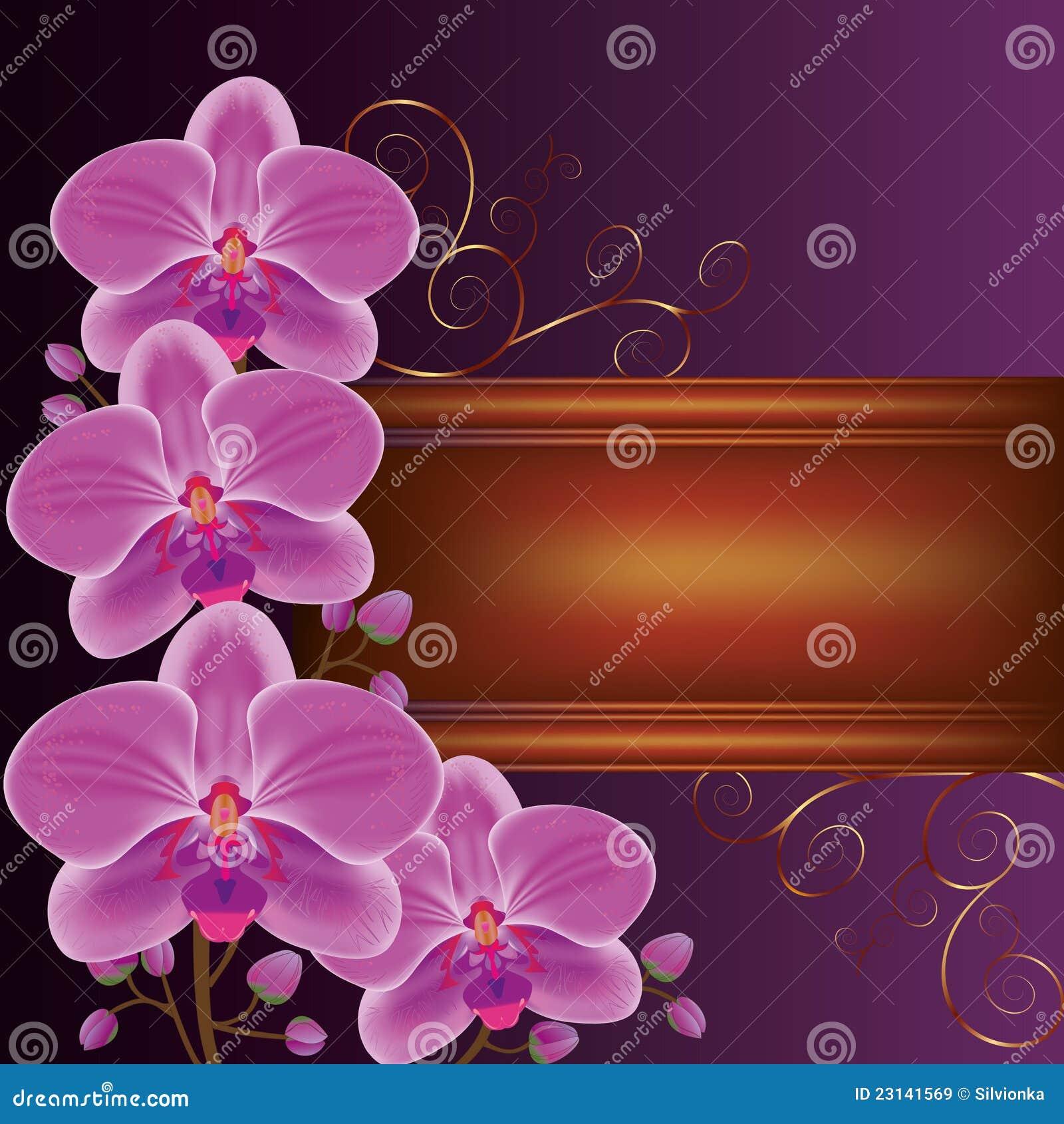 Fondo con las orquídeas exóticas de la flor Imágenes de archivo libres de  regalías