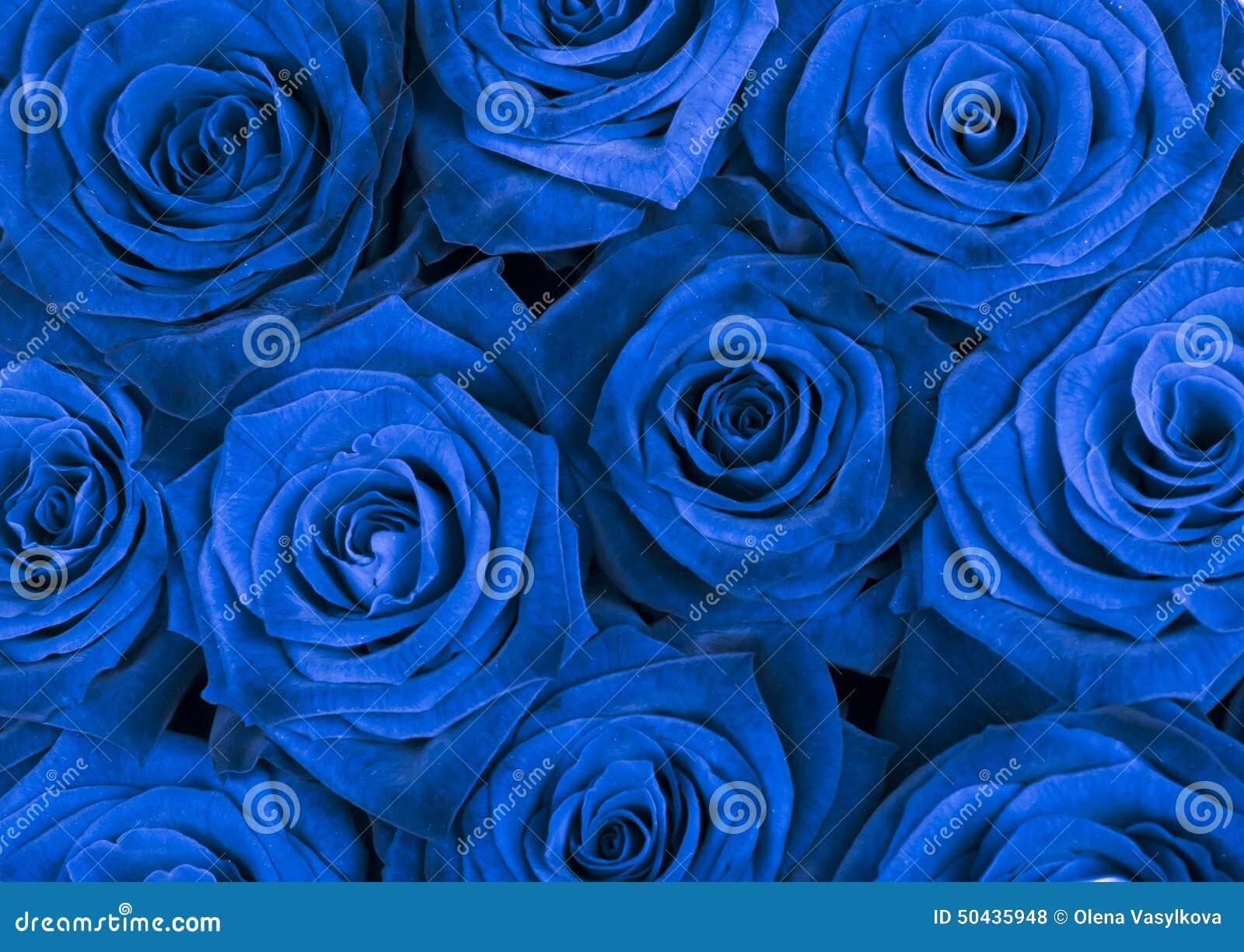 Fondo Con Las Rosas Azules Hermosas Foto De Archivo Imagen De