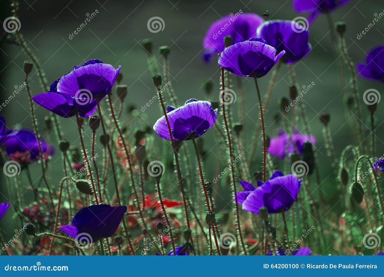 Fondo con tema floral