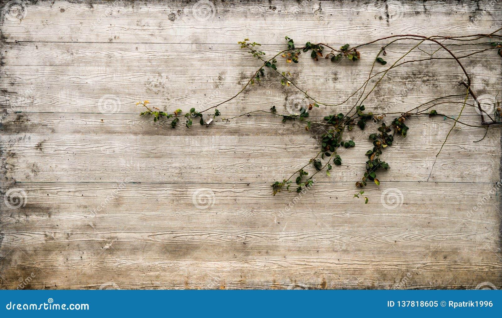 Fondo concreto de Rustical con adorno floral