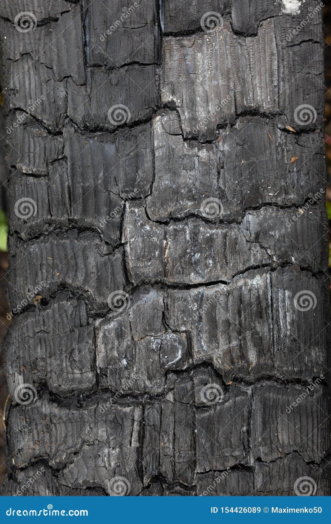 Fondo, contexto, madera carbonizada negra de la textura, madera, carbón después del fuego, abstracto y en grietas del carbón de l