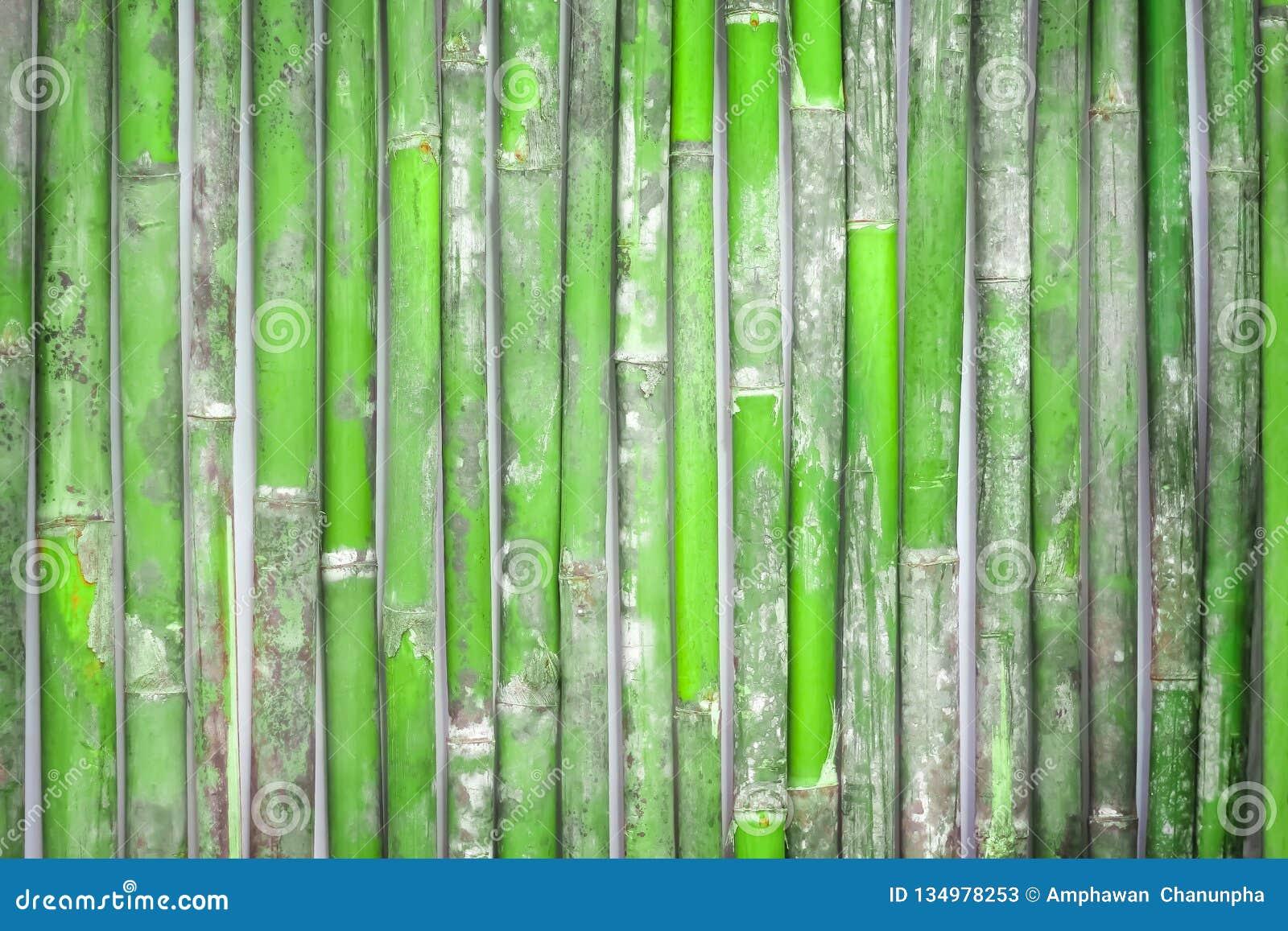 Fondo de bambú fresco de la cerca, pared de madera