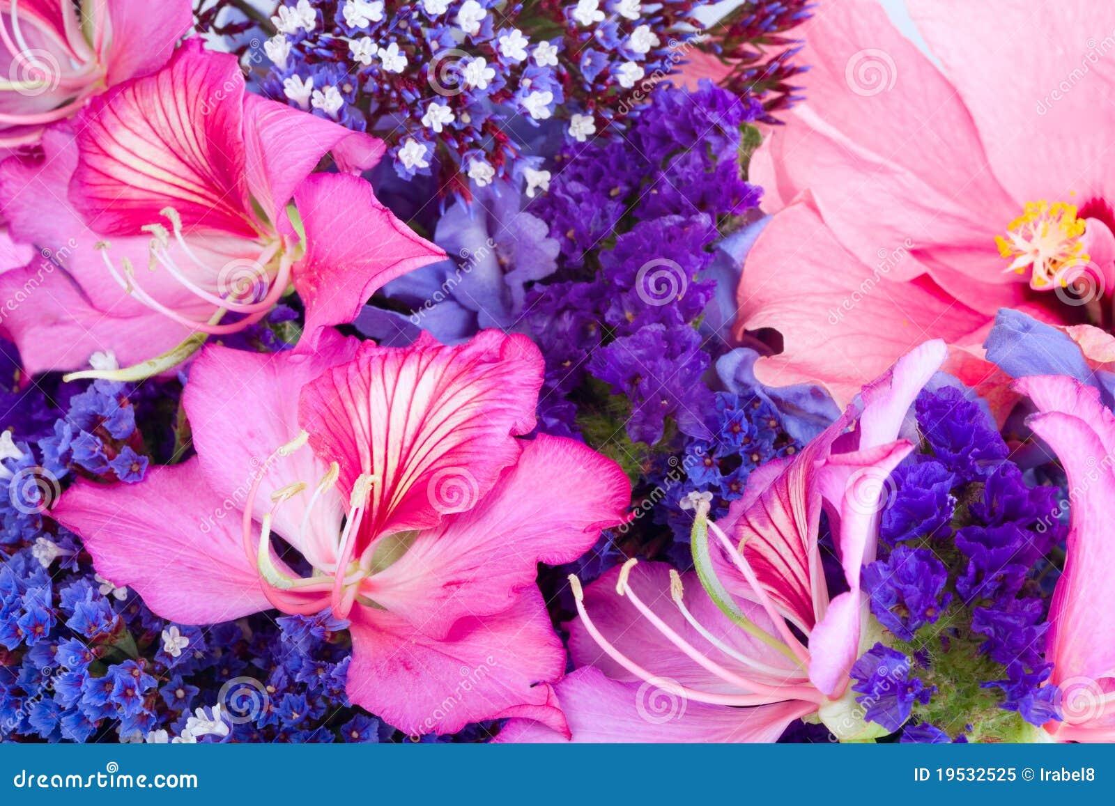 Fondo de flores tropicales foto de archivo libre de - Flores tropicales fotos ...