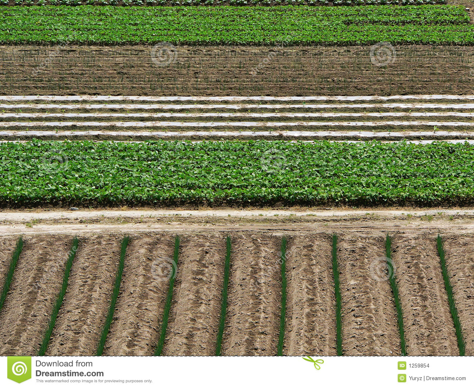 Fondo de la agricultura