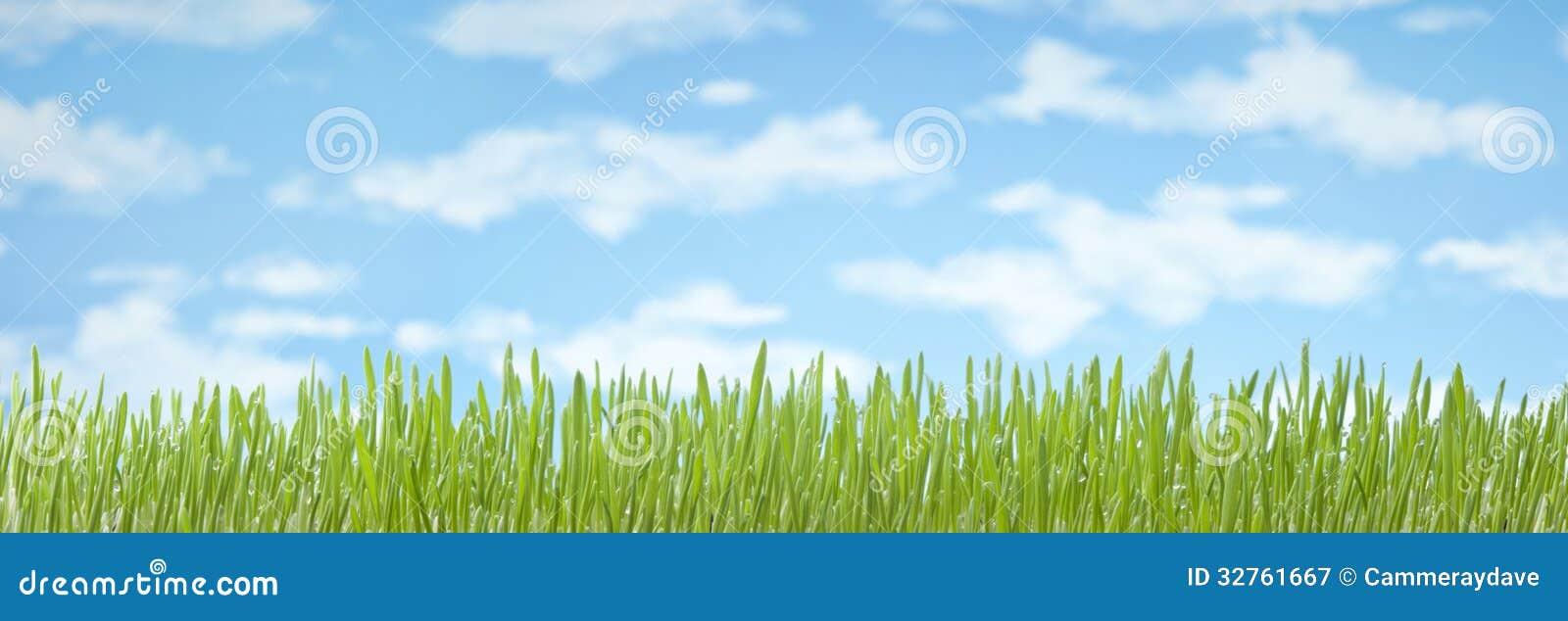 Fondo de la bandera del cielo de la hierba