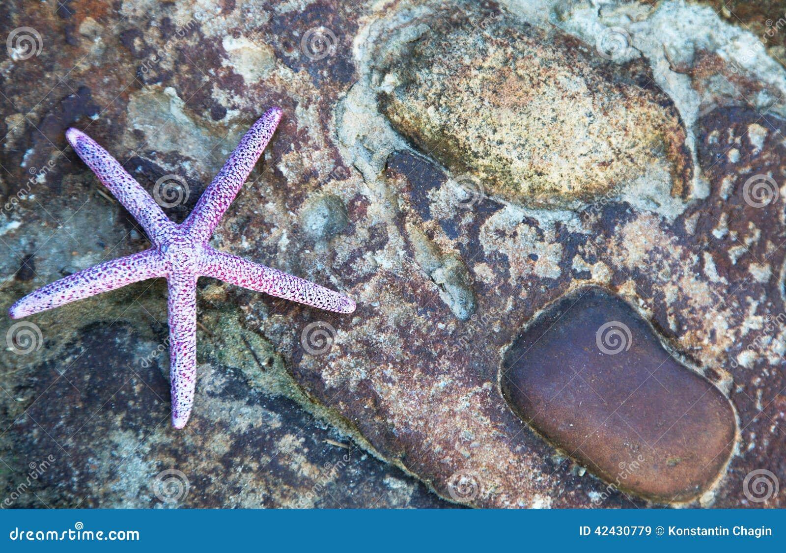 Fondo de la estrella de mar