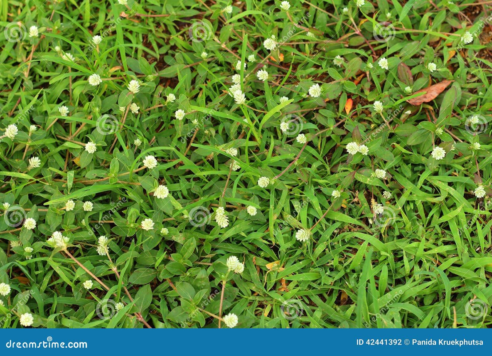 Fondo de la flor de la hierba