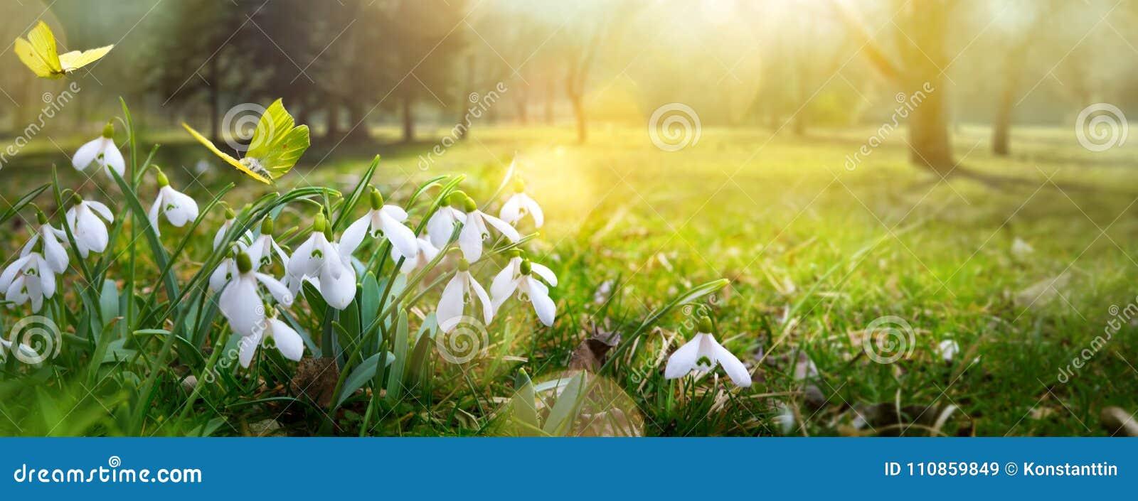 Fondo de la flor de la primavera de Pascua; flor fresca y mariposa