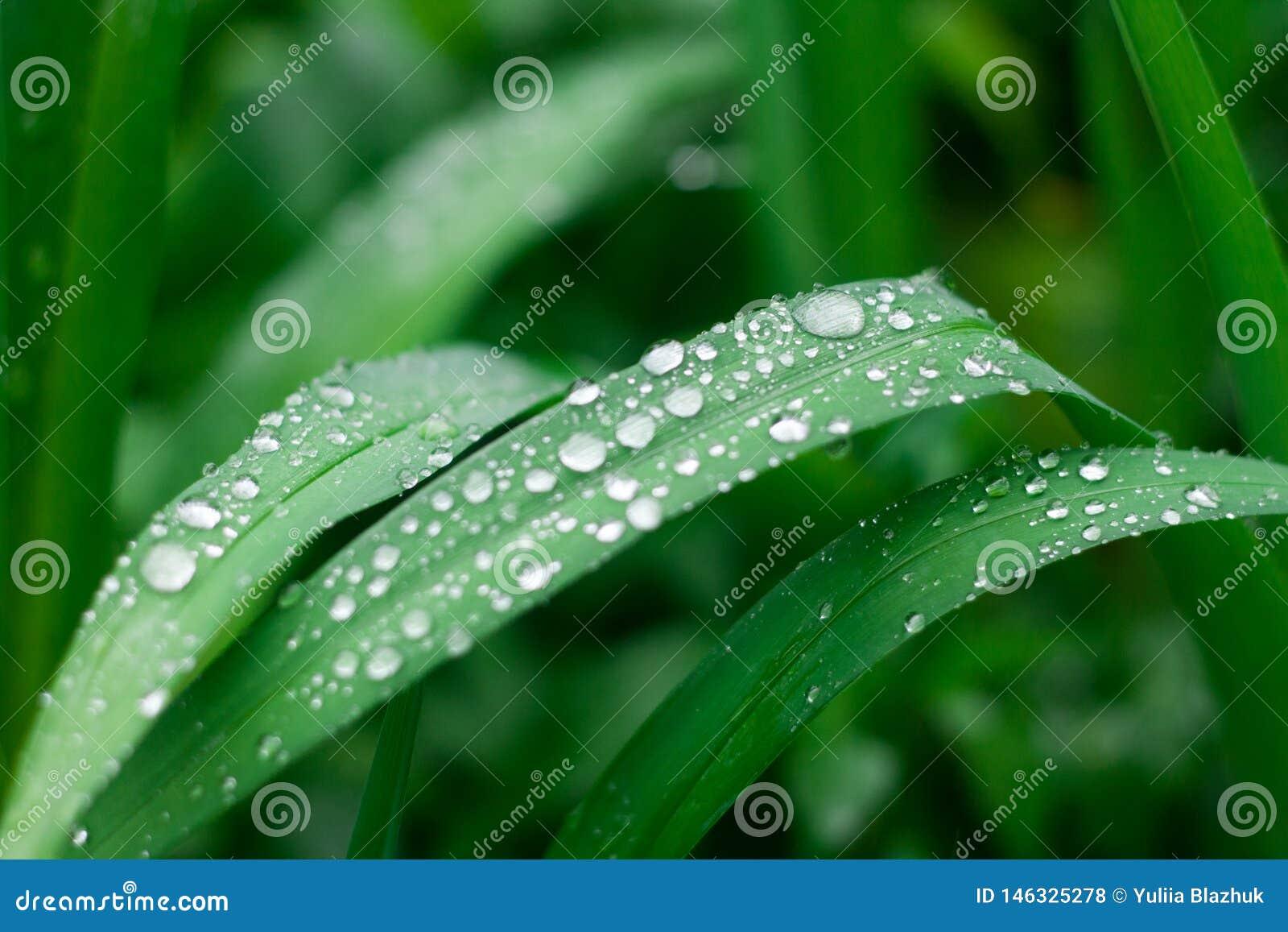 Fondo de la hierba con descensos del agua