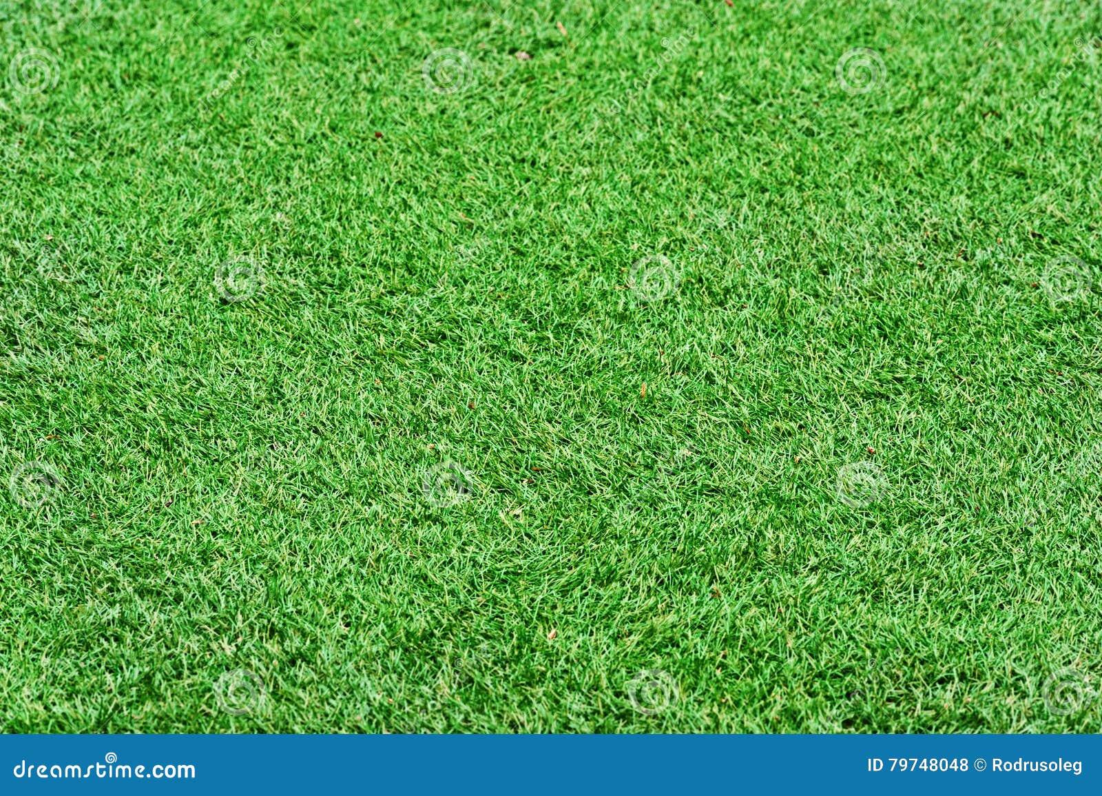 Fondo de la hierba verde del campo