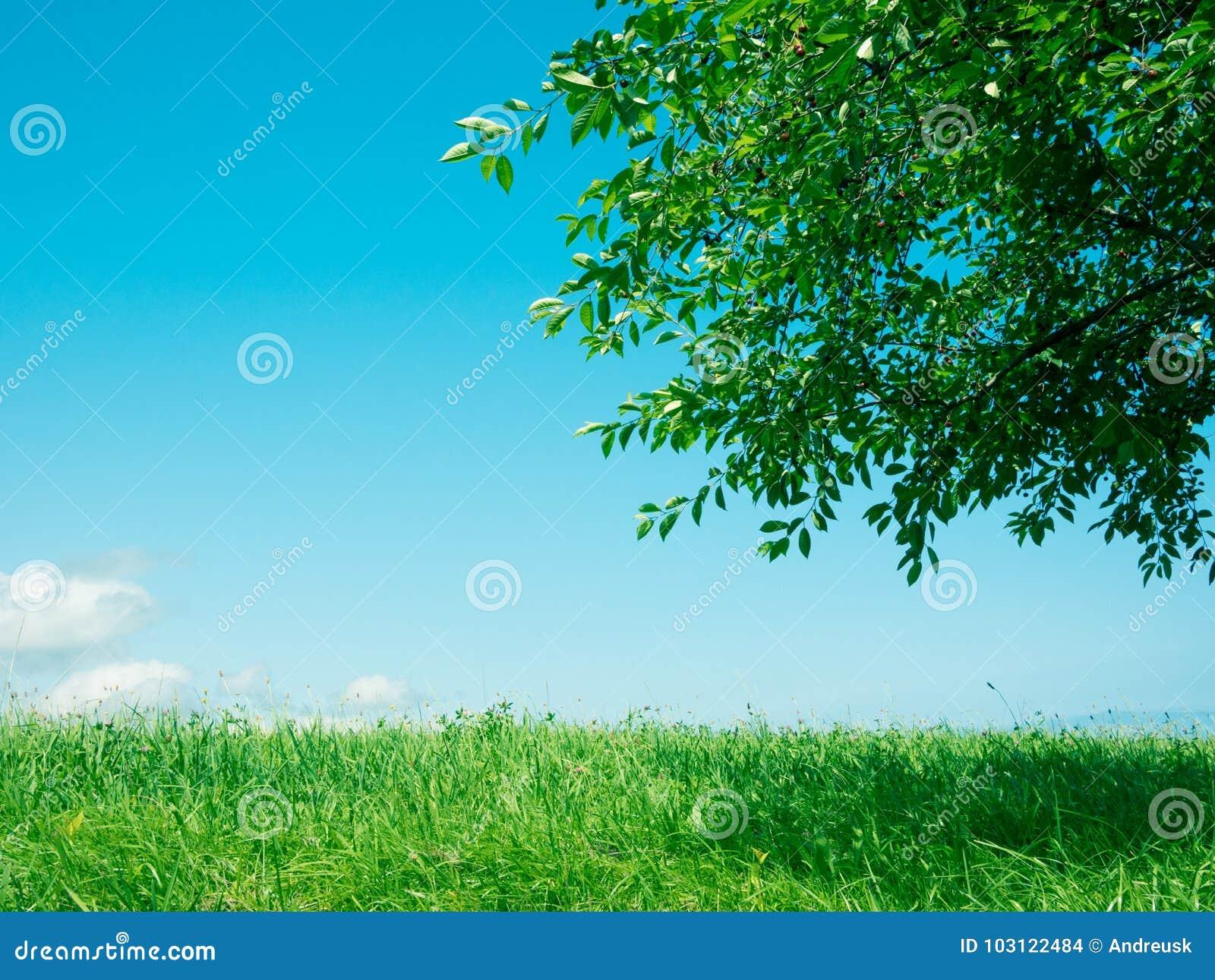 Fondo de la hierba y de la naturaleza del árbol