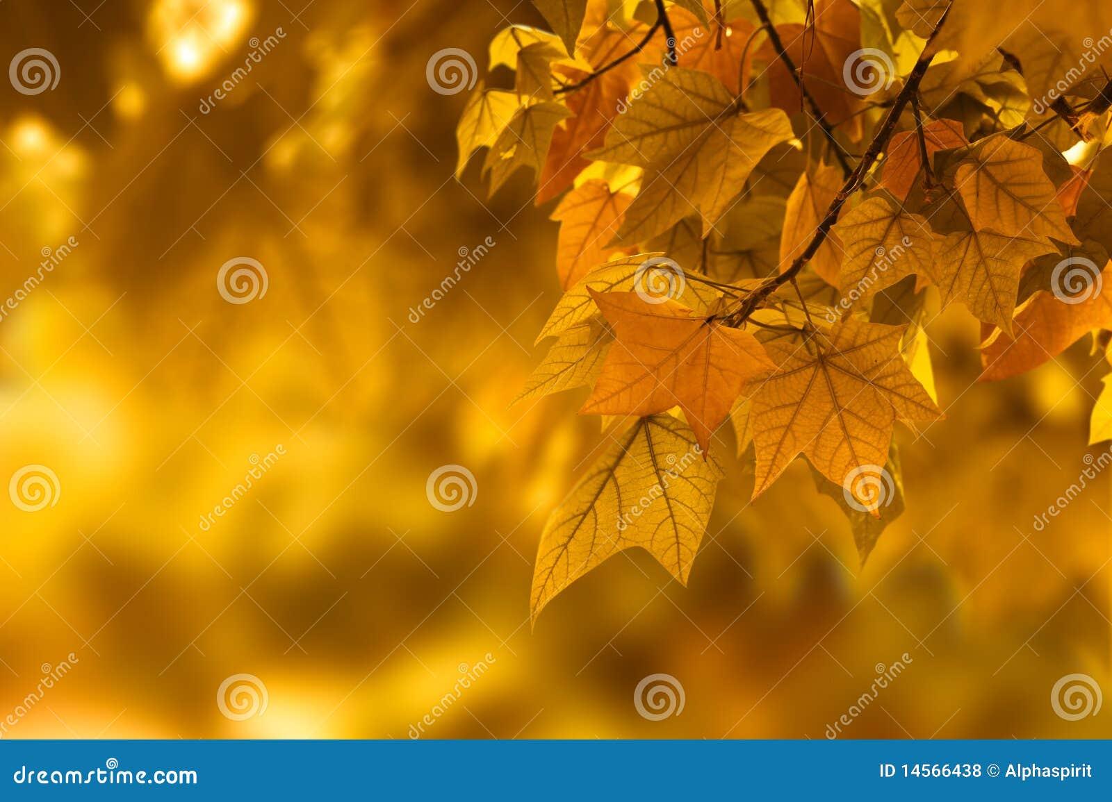 Fondo de la hoja del otoño