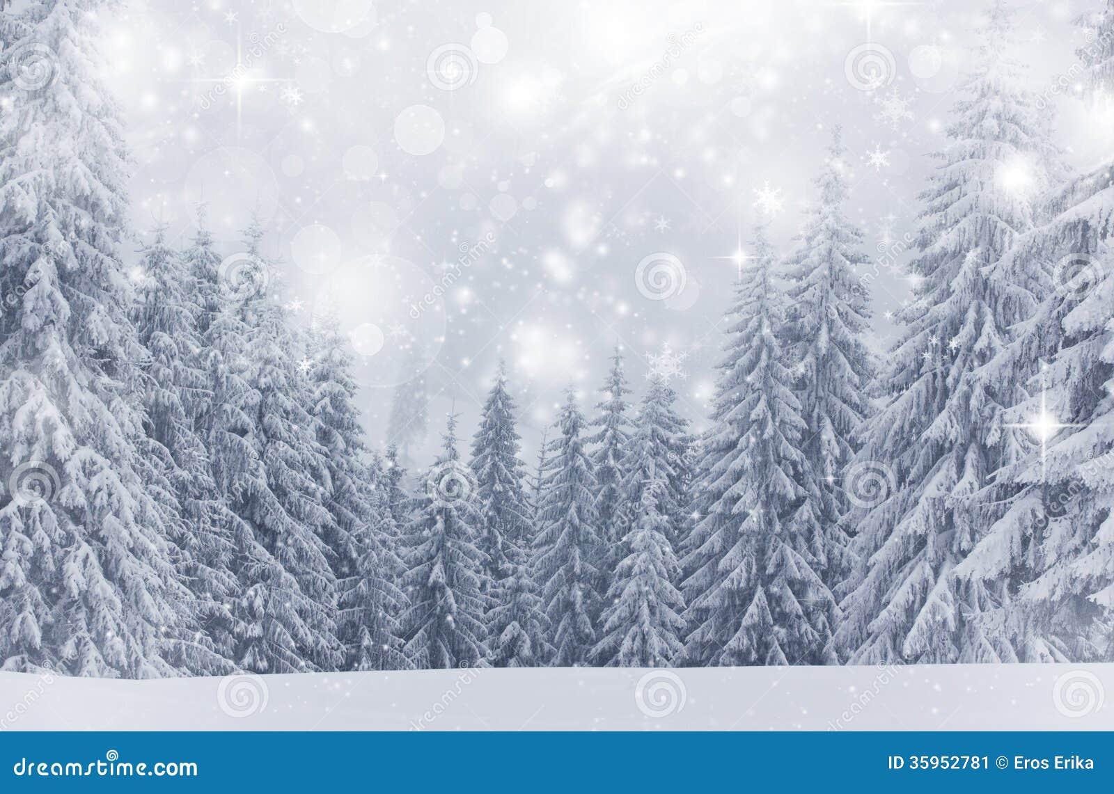 Fondo de la Navidad con las estrellas y los abetos nevosos
