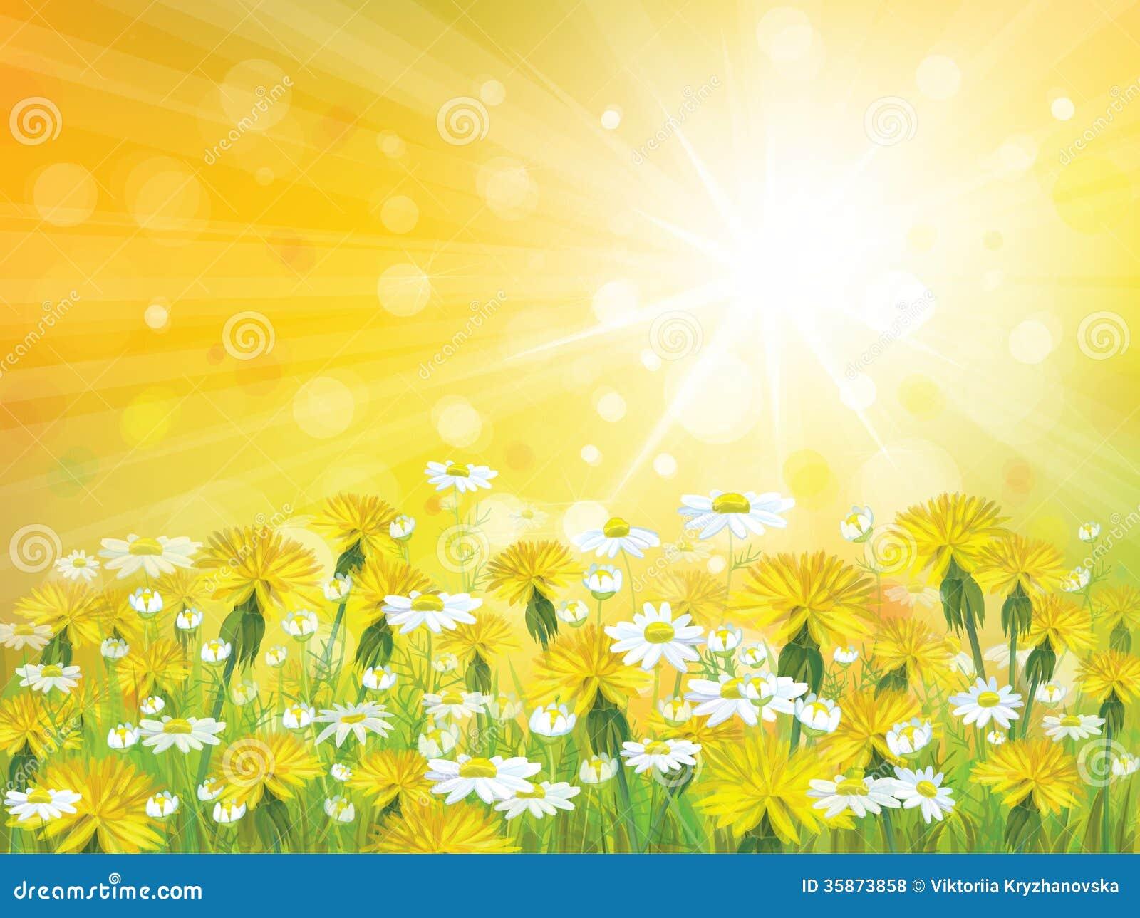 Fondo de la sol del vector con las manzanillas amarillas