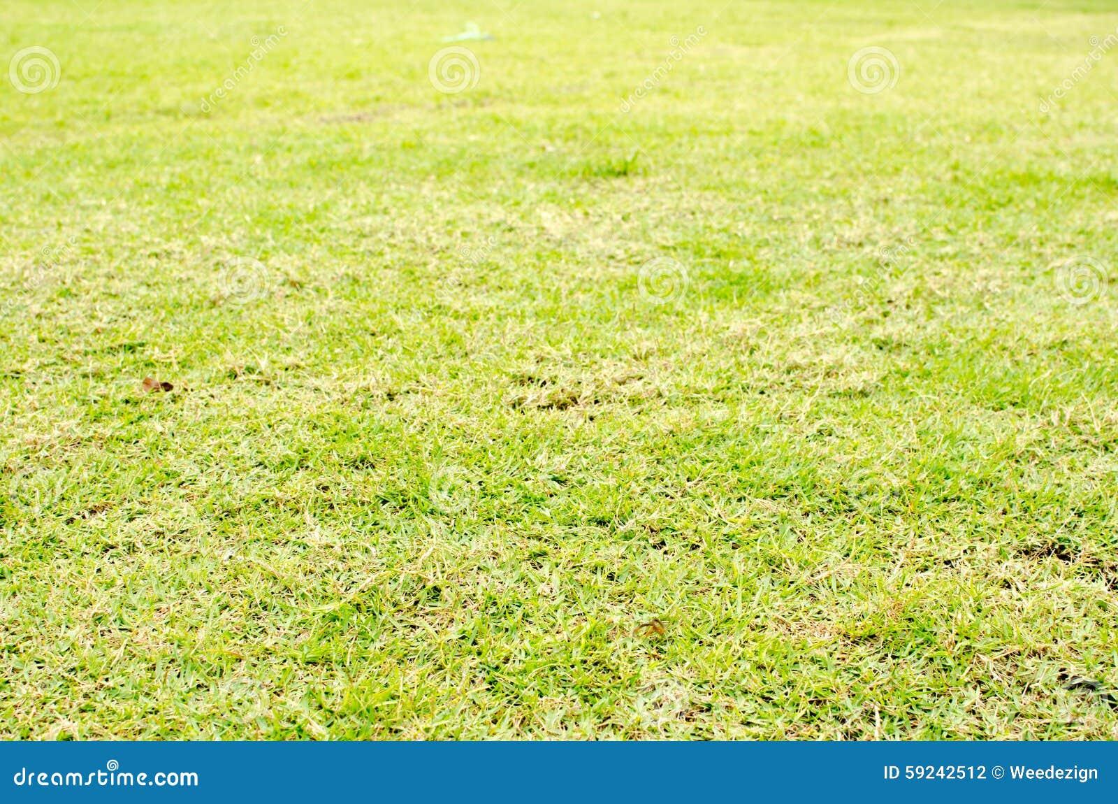 Download Fondo De La Textura De La Hierba Verde De La Perspectiva, Fondo Natural Foto de archivo - Imagen de restauración, textura: 59242512