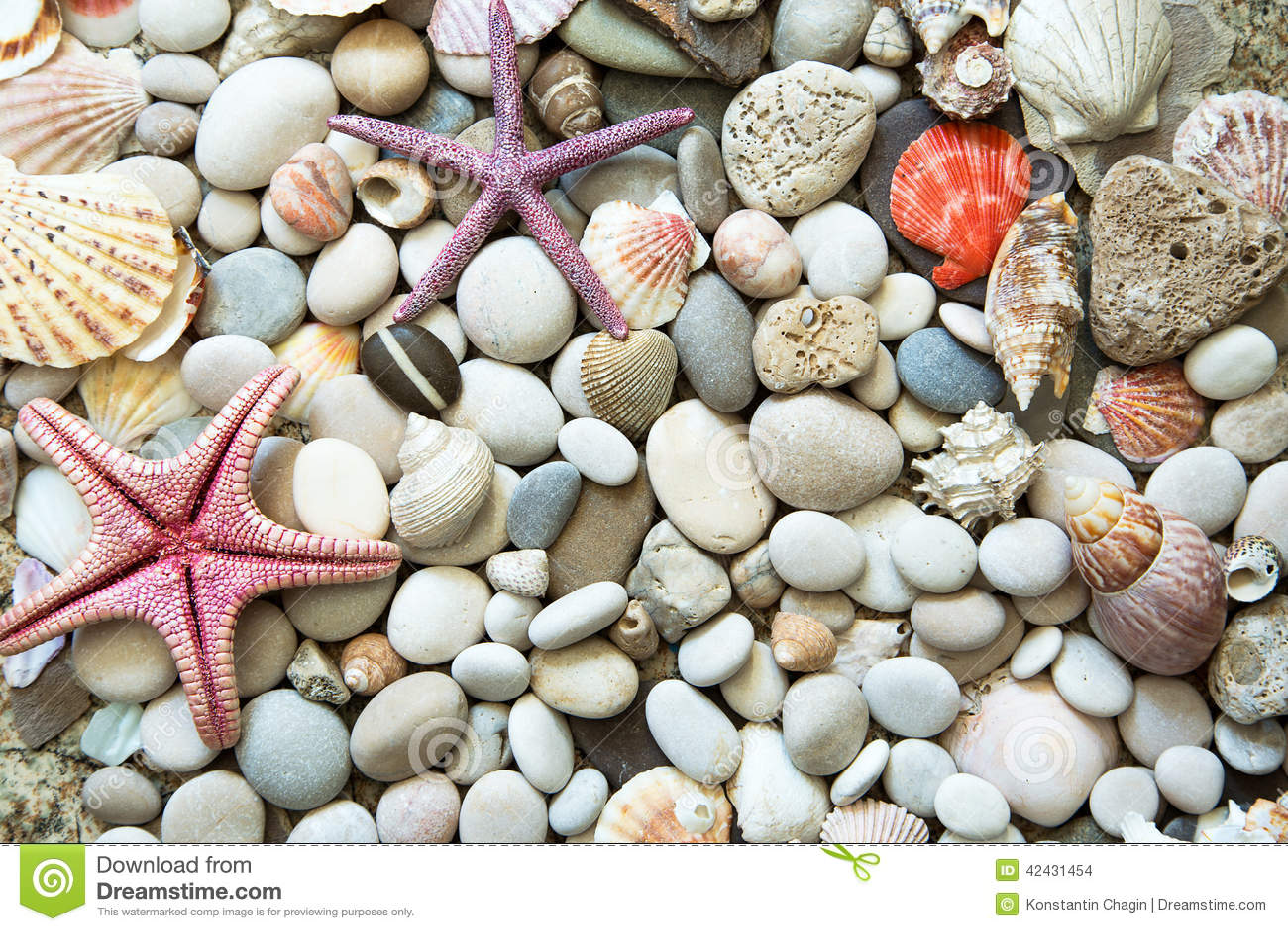 Fondo de las cáscaras del mar