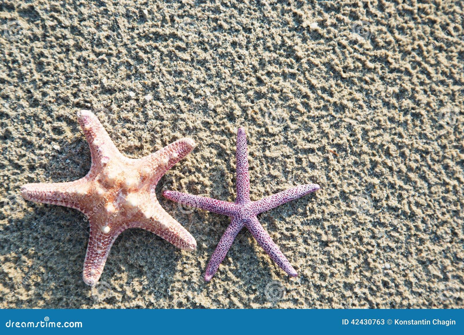 Fondo de las estrellas de mar