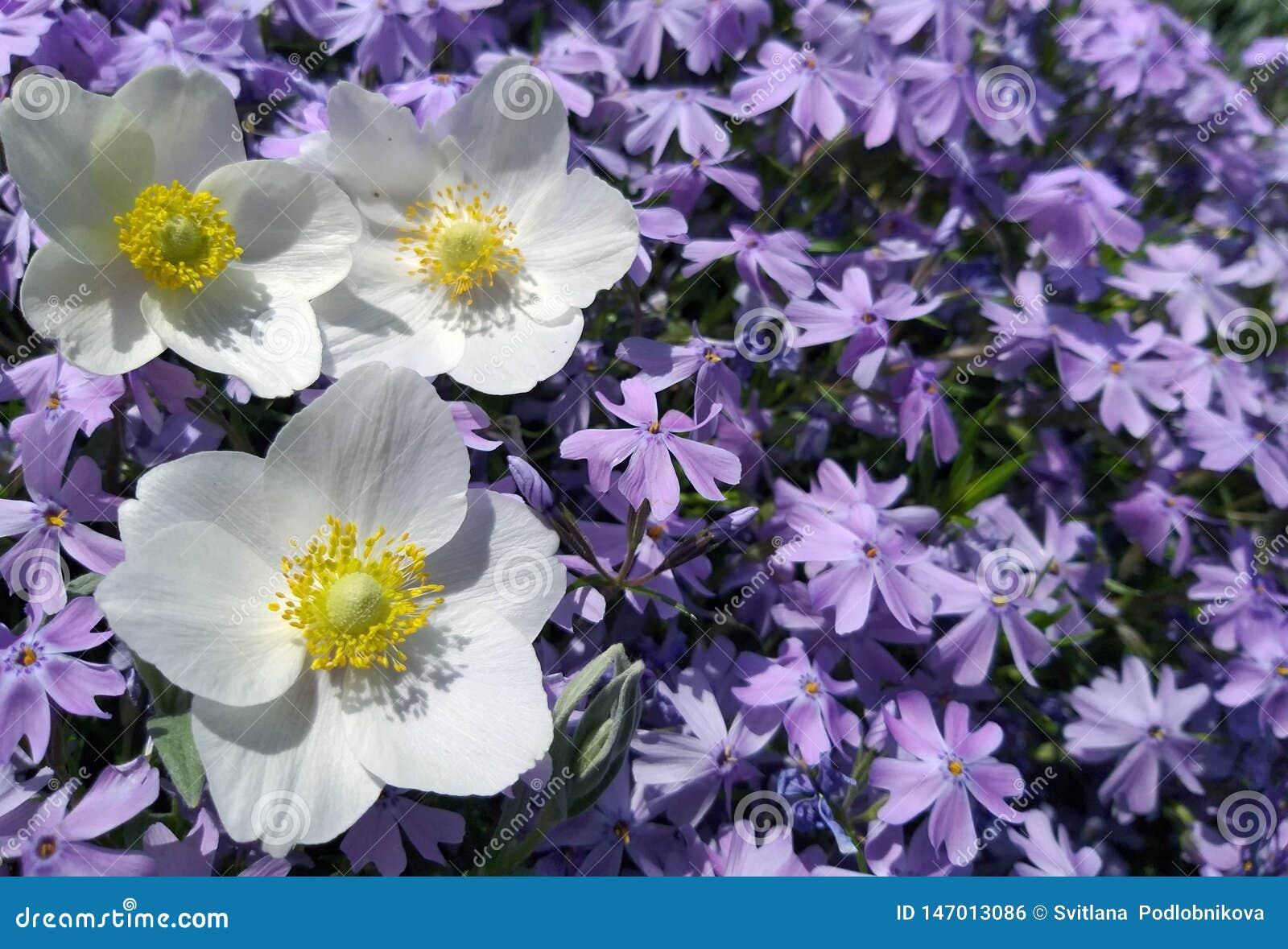 Fondo de las flores en el jardín
