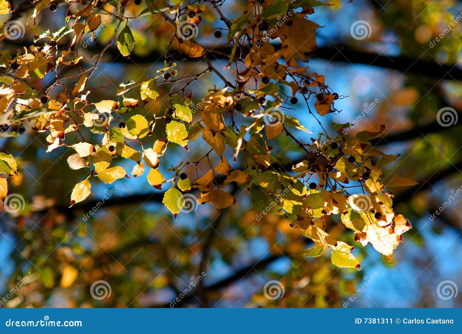 Fondo de las hojas