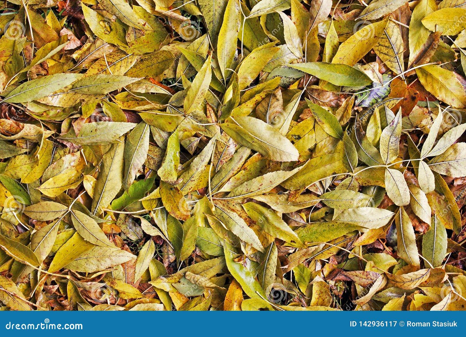 Fondo de las hojas amarillas Otoño