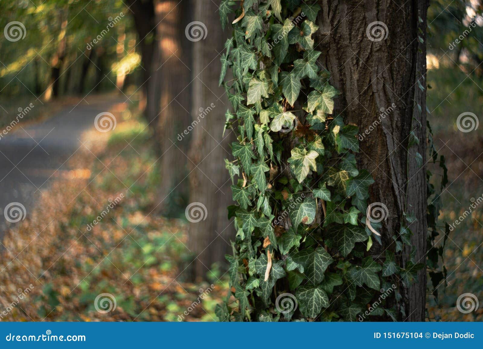 Fondo de los árboles y de las hojas del otoño