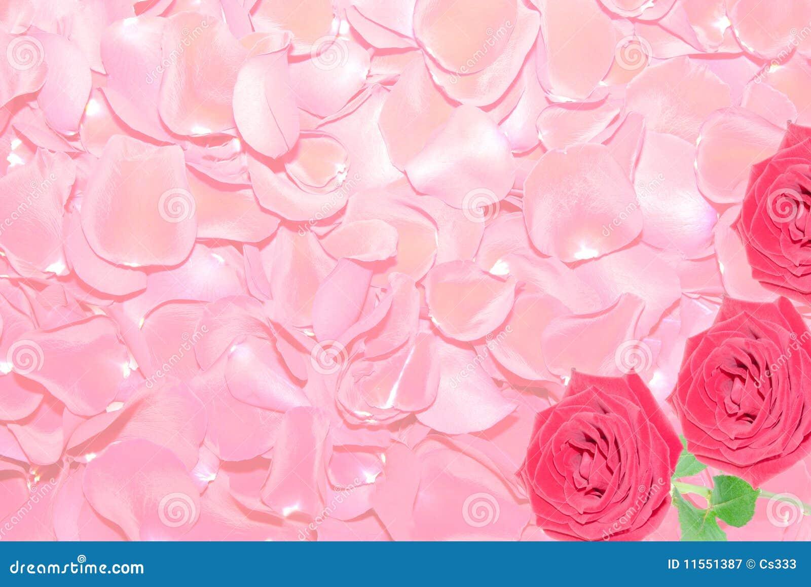 fondo de los p talos de rosas rojas fotograf a de archivo