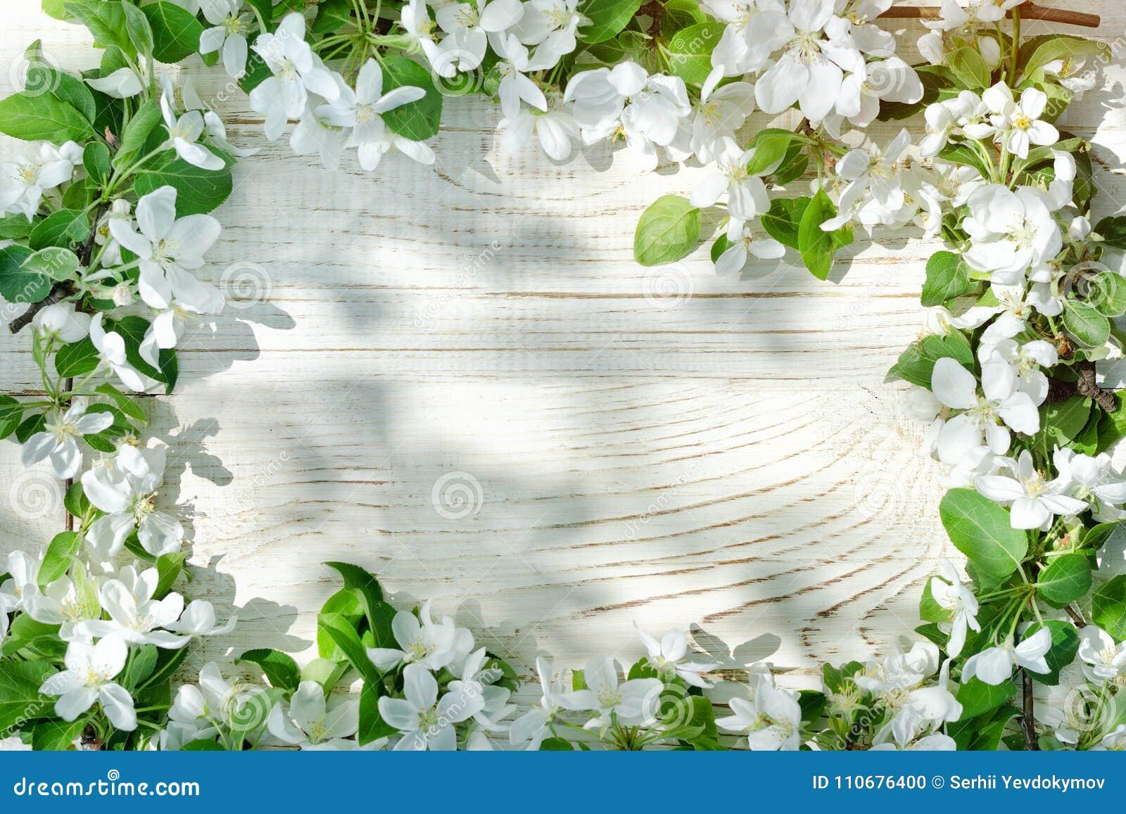 Fondo De Madera Vintage Con Flores Blancas Manzana Y: Fondo De Madera Blanco Flores De La Manzana Al Borde Del