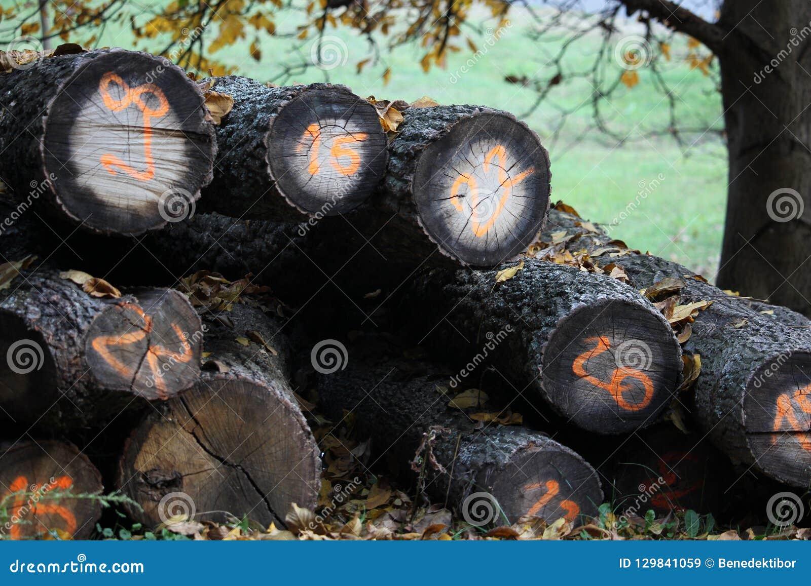 Fondo de madera de la pila del otoño con números