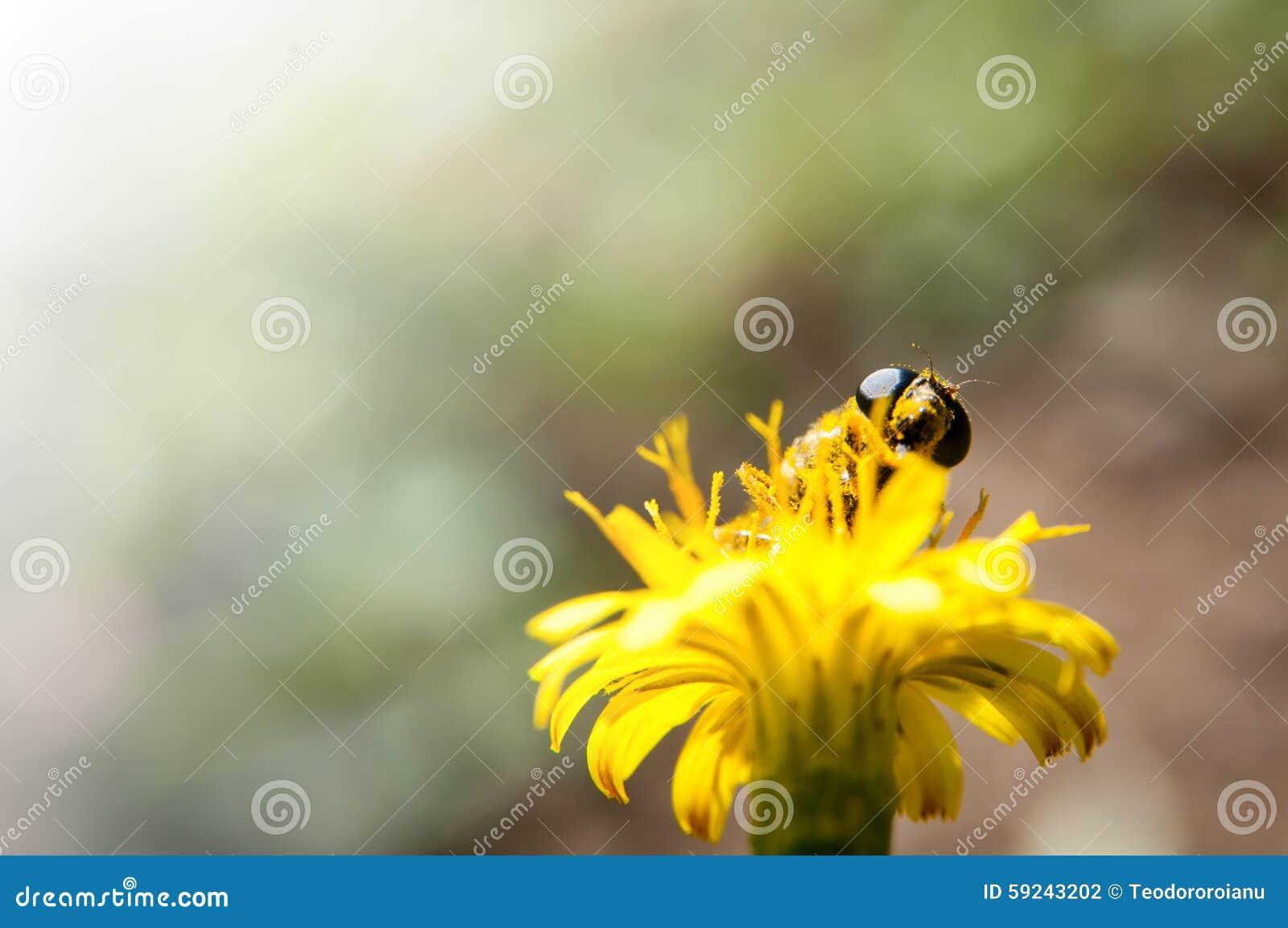 Fondo de polinización de la abeja