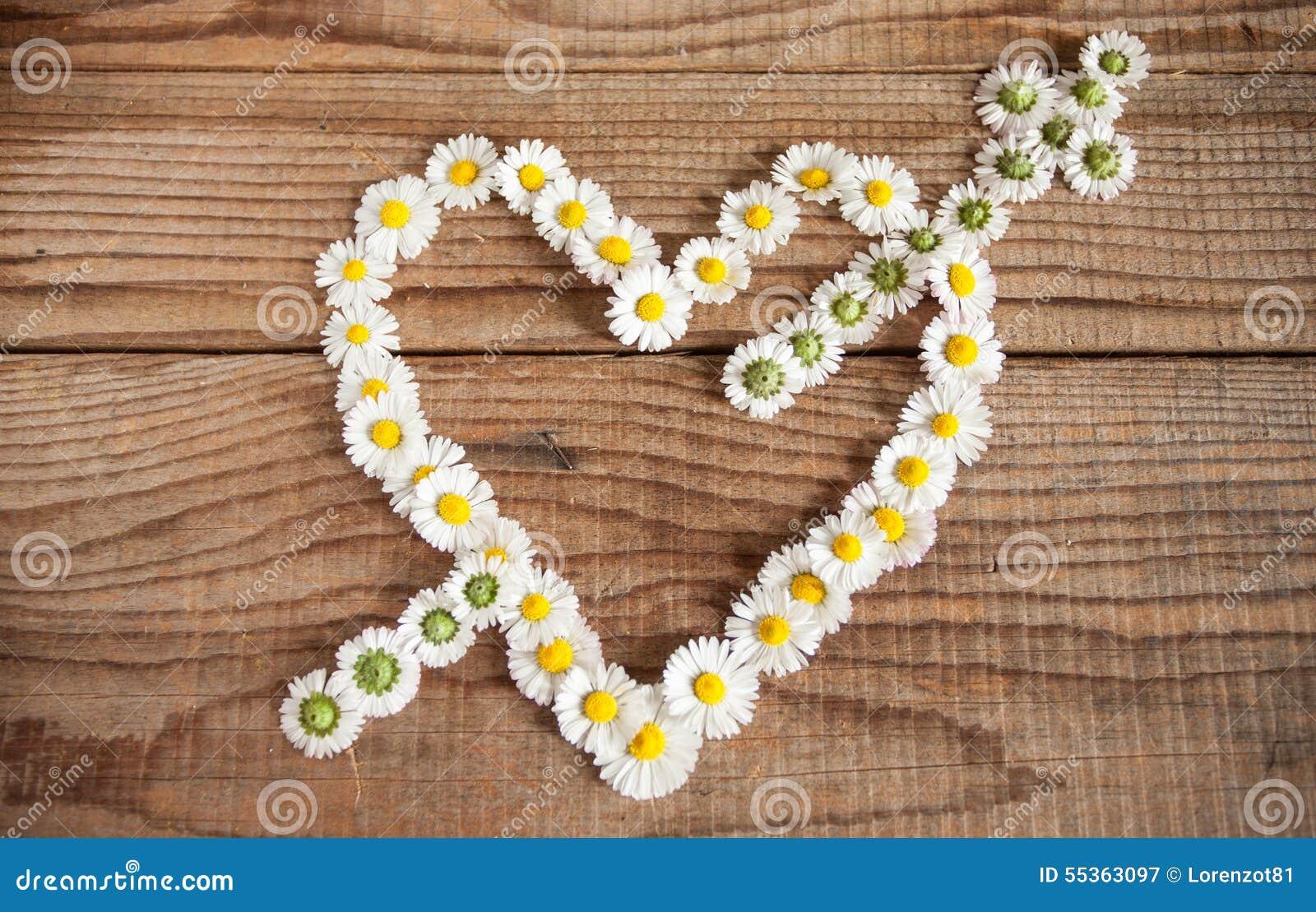 Fondo dei fiori delle margherite