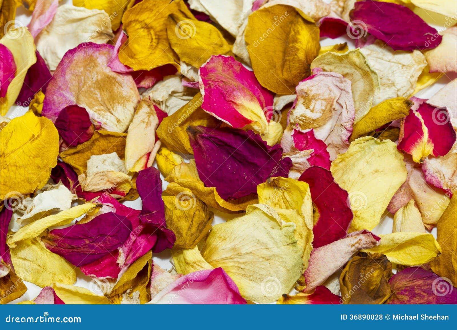 Download Fondo dei petali di Rosa fotografia stock. Immagine di valentine - 36890028