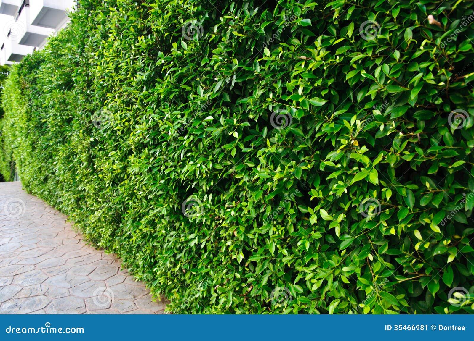 fondo del arbusto del jard n jard n imagen de archivo