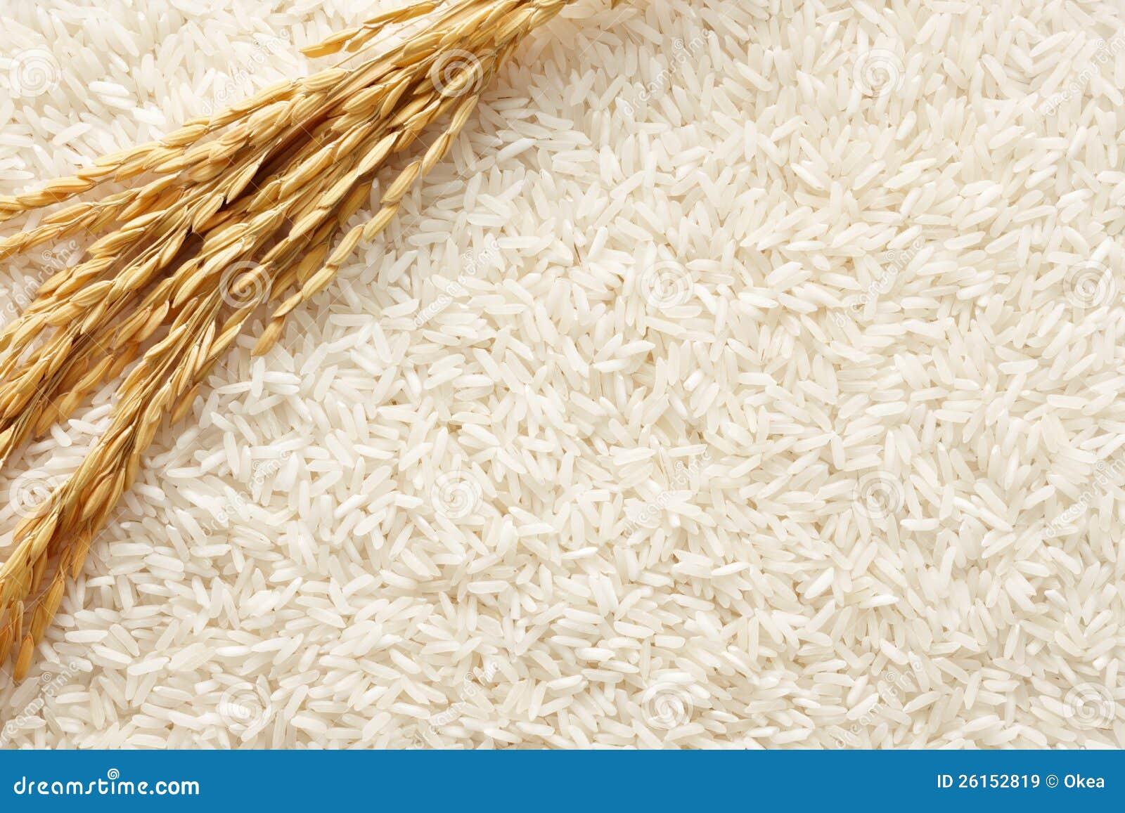 Fondo del arroz