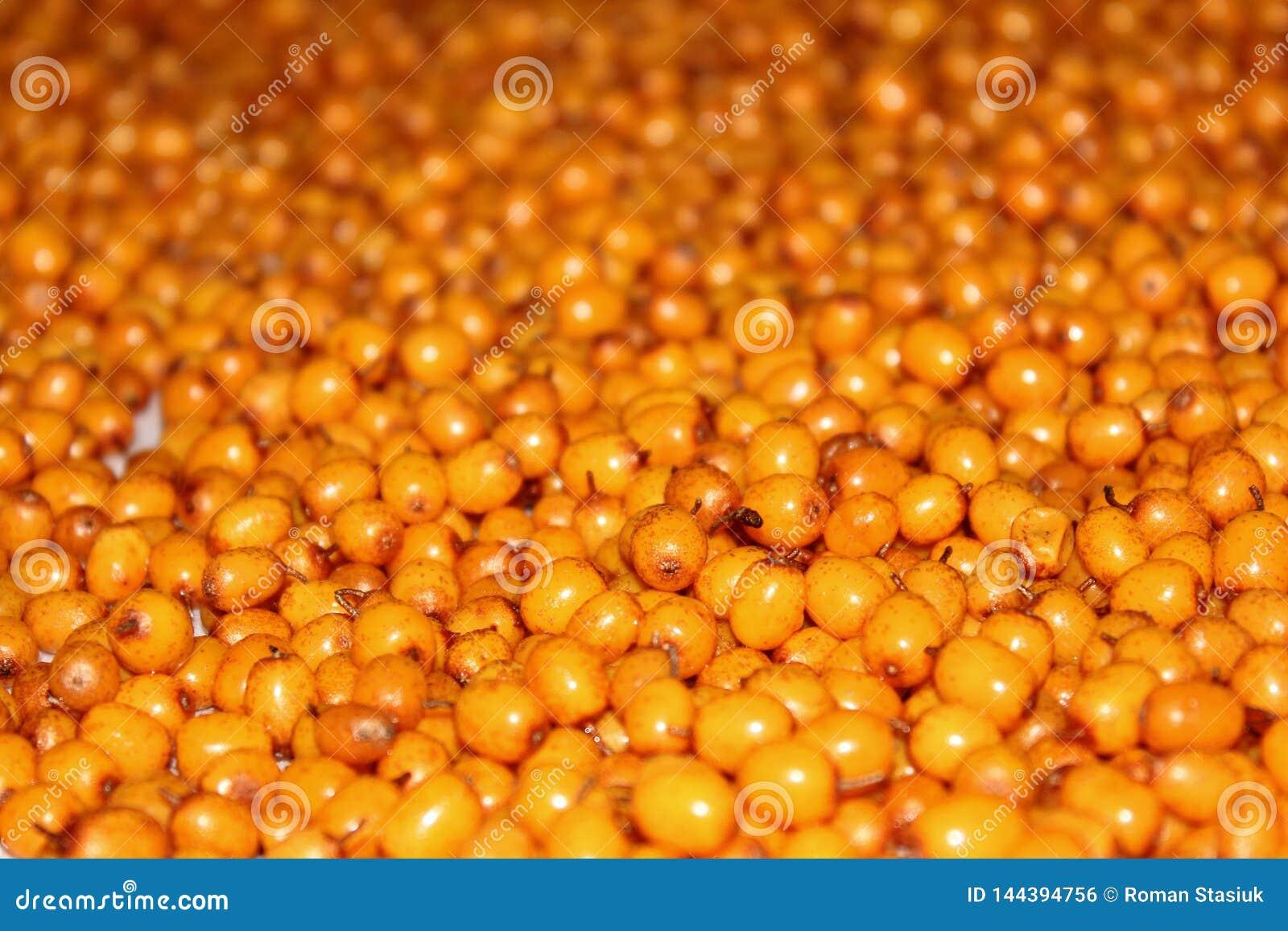 Fondo del berrie amarillo fondo del espino cerval del sSea
