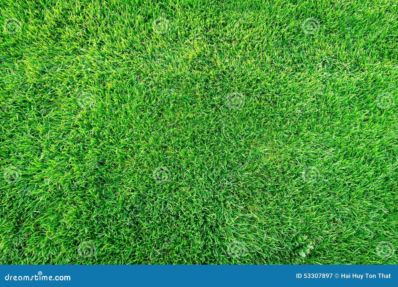 Fondo del campo di erba verde, struttura, modello