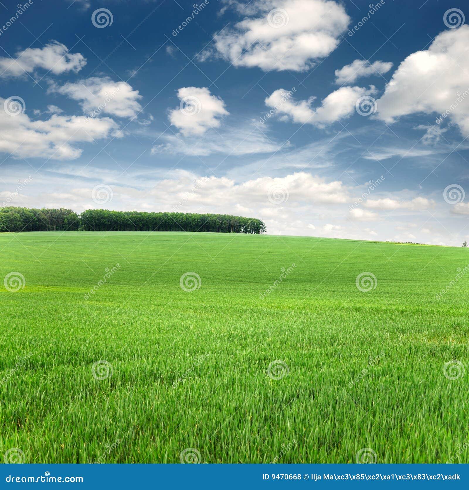Fondo del cielo y de la hierba