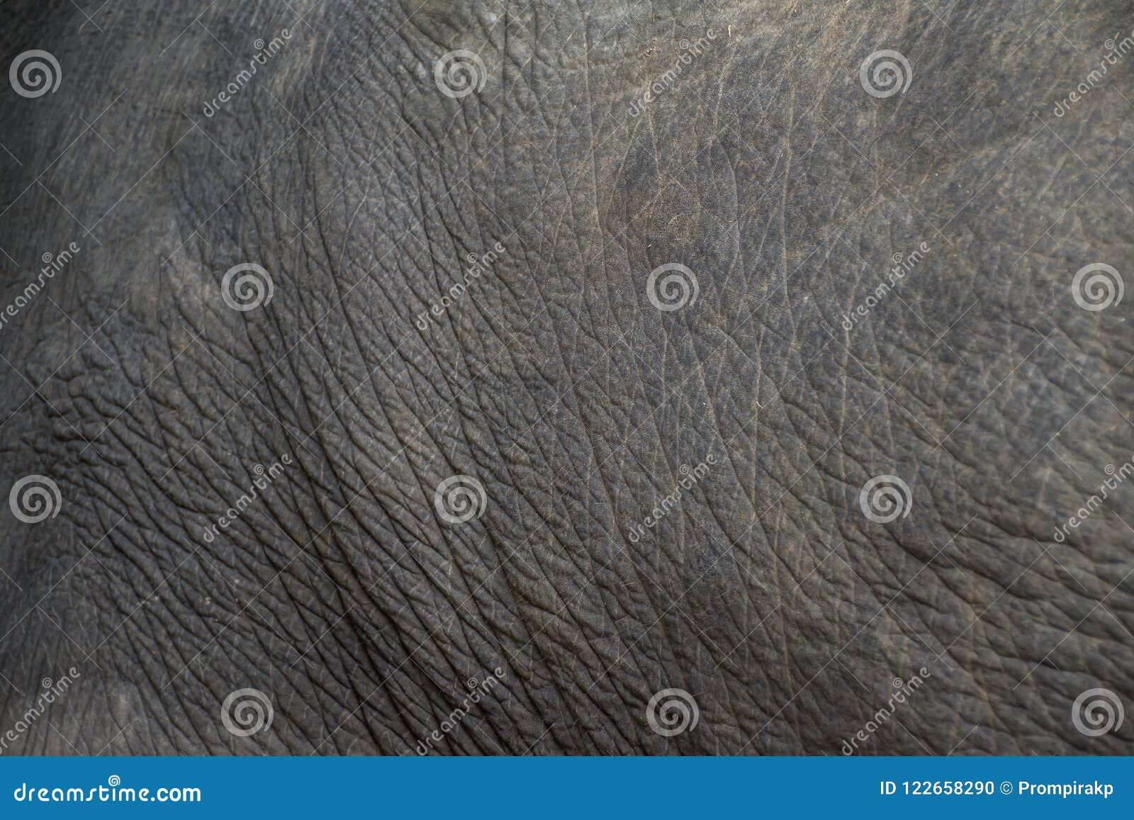 piel del elefante