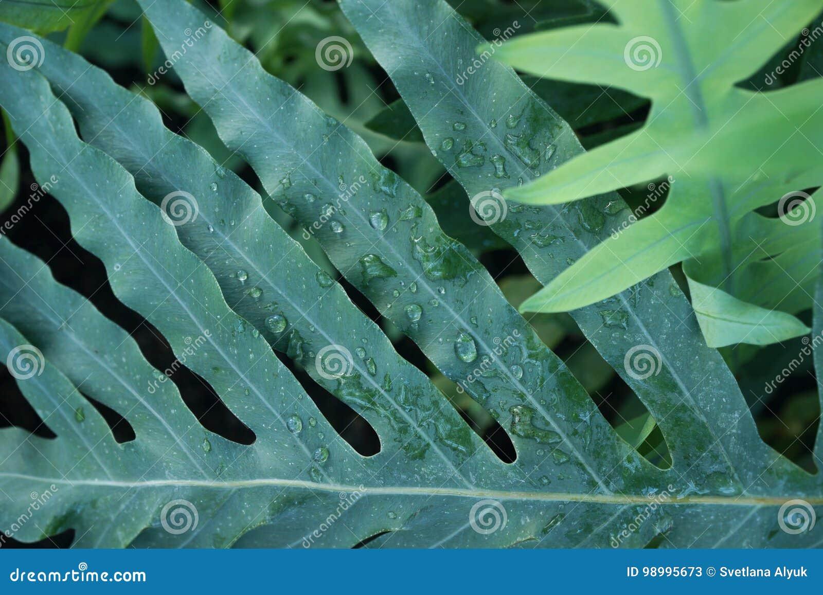 Fondo del follaje del verde de la planta tropical