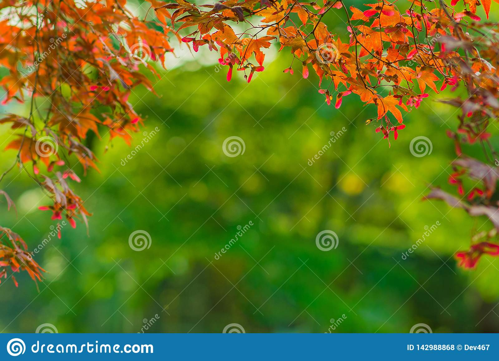 Fondo del marco del otoño