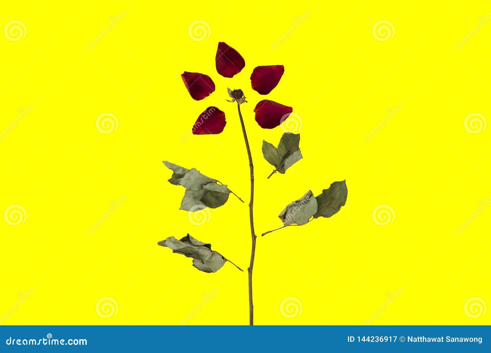 Fondo del modelo de Rose Pétalos inconsútiles de la imagen con las flores