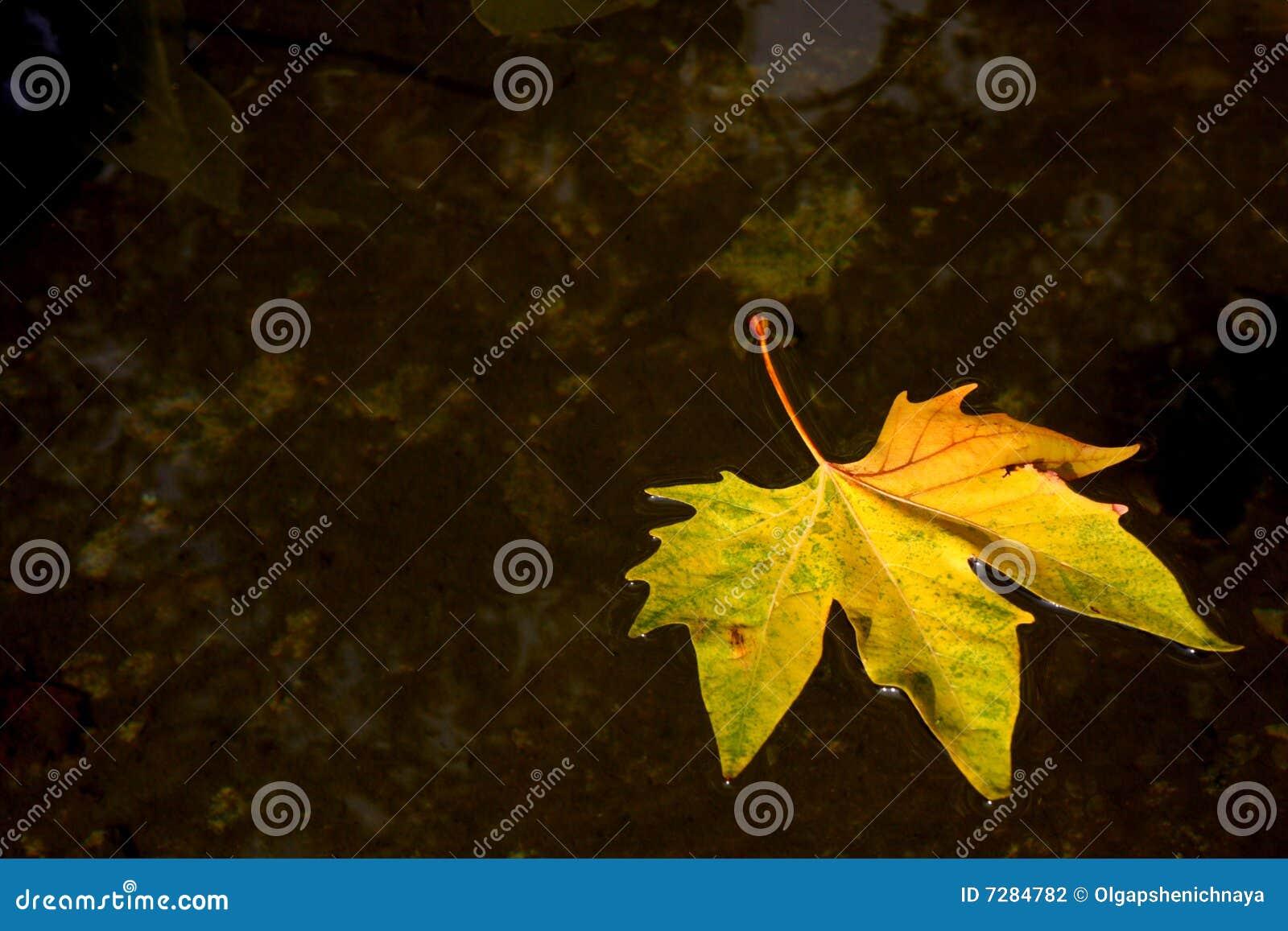 Fondo del otoño