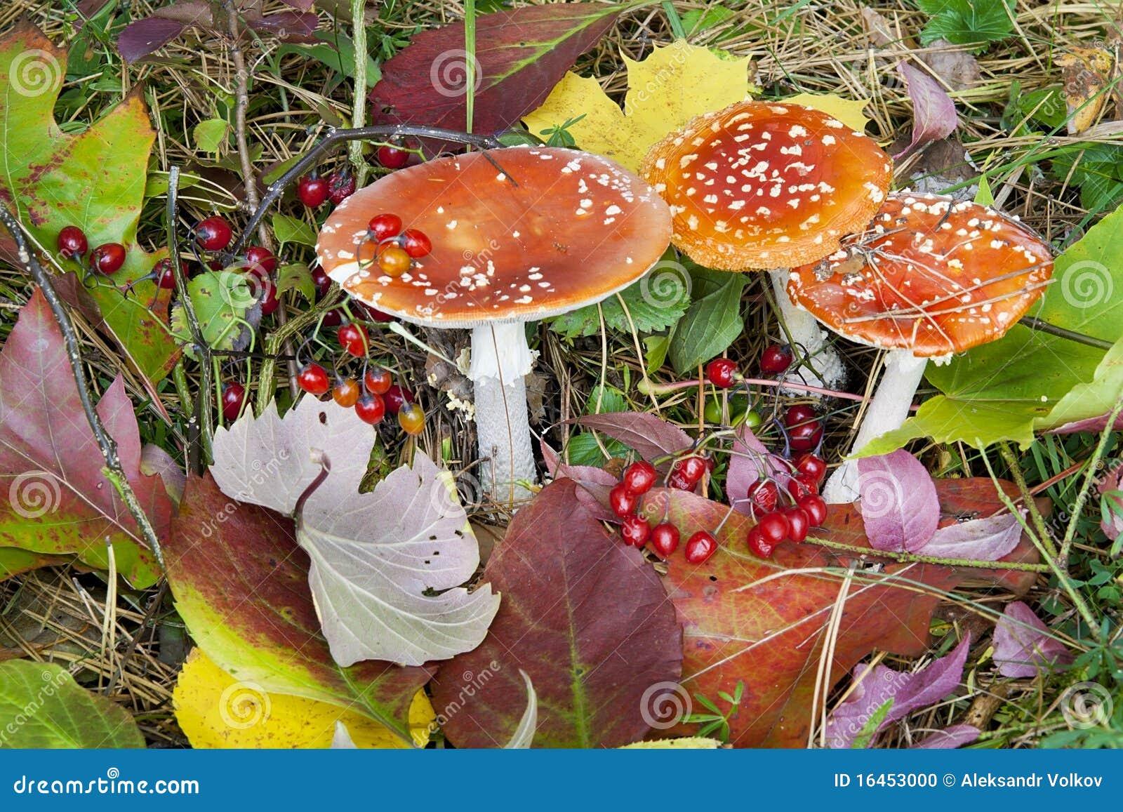 Fondo del otoño - setas, bayas y hojas